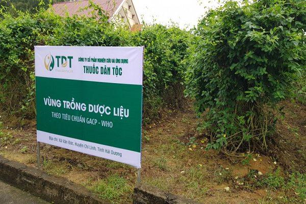 Trung tâm Thuốc dân tộc sở hữu vườn dược liệu sạch hàng trăm ha