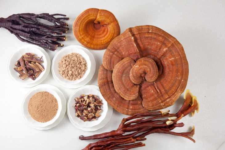 Nấm Linh Chi là một vị thuốc Bắc có nhiều công dụng