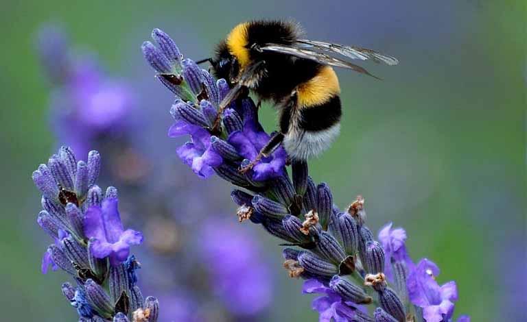Phấn hoa là yếu tố thường thấy khiến nổi mề đay ở cổ