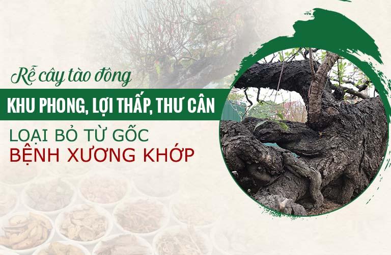 Rễ tào đông là vị thuốc giúp tiêu viêm giảm đau hữu hiệu, lần đầu được ứng dụng tại Việt Nam
