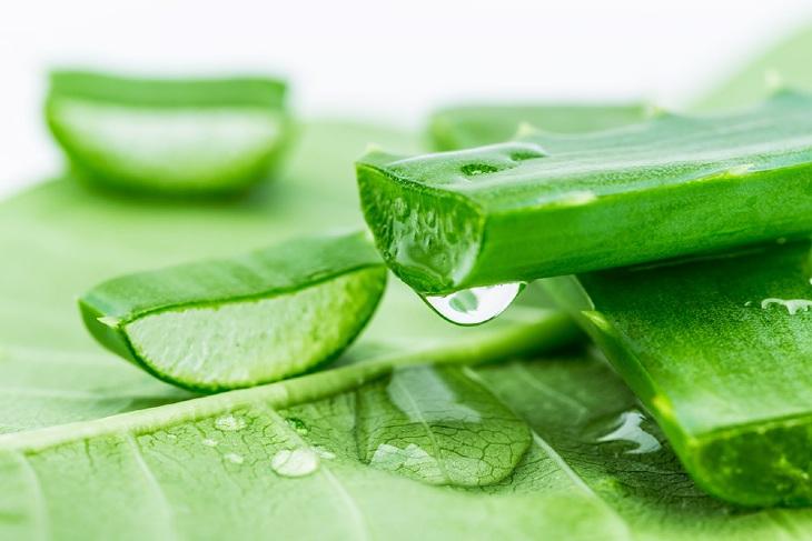 Nha đam giúp cung cấp độ ẩm cần thiết cho da