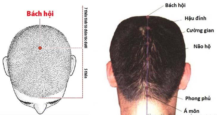 Dương ngũ hội giúp ổn định huyết áp, cải thiện đau đầu, ù tai