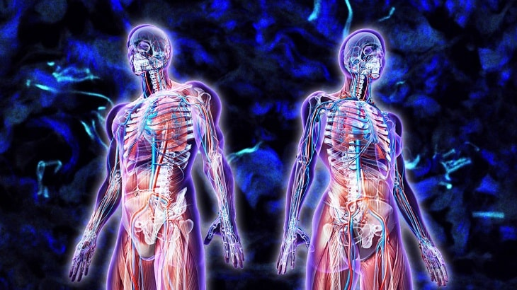 Hình ảnh lục phủ ngũ tạng người