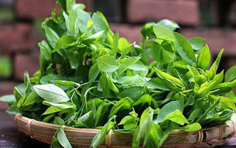 rau ngót được coi như một vị thuốc có khả năng chữa trị yếu sinh lý