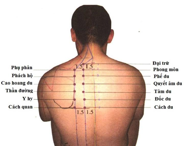 Huyệt Cách Du là huyệt đạo nằm tại đốt sống thứ 7 phía sau lưng