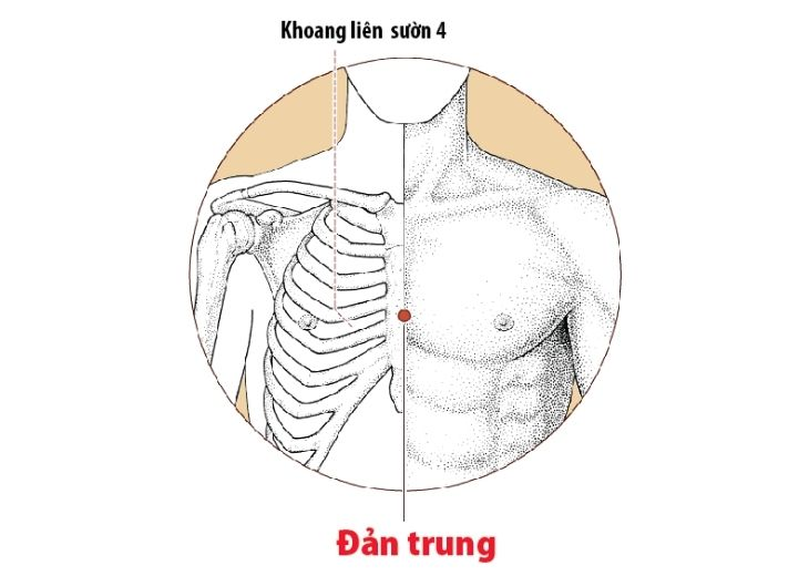 Hình ảnh huyệt Đản Trung trên cơ thể con người