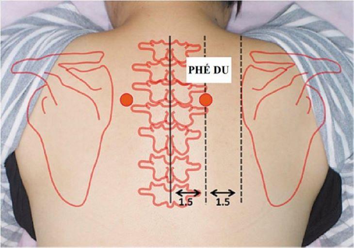 Vị trí của huyệt phế du được xác định như hình