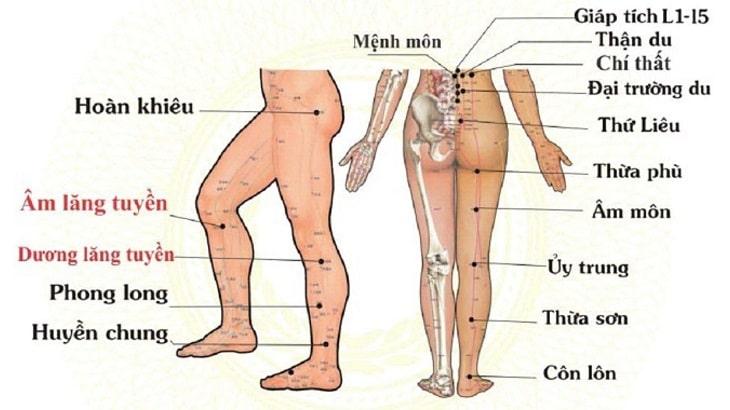 Vị trí huyệt Thừa Phù trên cơ thể người