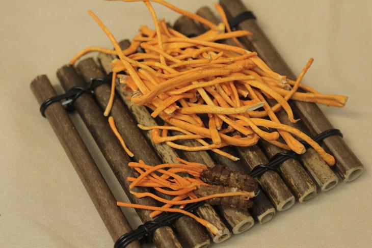 Đông trùng hạ thảo sợi khô sấy thăng hoa là phương pháp bảo quản tối ưu nhất