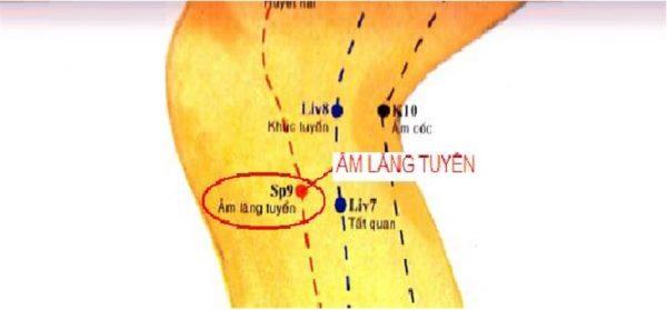 Huyệt Âm Lăng Tuyền nằm ở đâu? Tác dụng và cách châm cứu