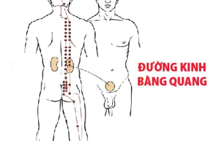 Huyệt nằm ở kinh bàng quang trên cơ thể