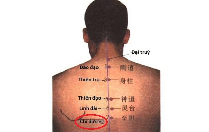Huyệt Chí Dương được đánh giá cao về hiệu quả trị liệu, chăm sóc sức khỏe con người