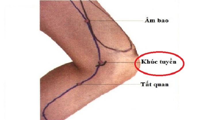 Huyệt Khúc Tuyền là điểm kết nối hệ thống kinh mạch, đem lại nhiều hiệu quả trị bệnh tích cực