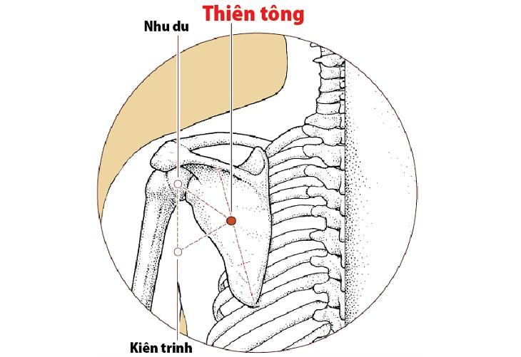 Huyệt nằm tại chính giữa phía dưới của bờ gai xương bả vaiHuyệt nằm tại chính giữa phía dưới của bờ gai xương bả vai