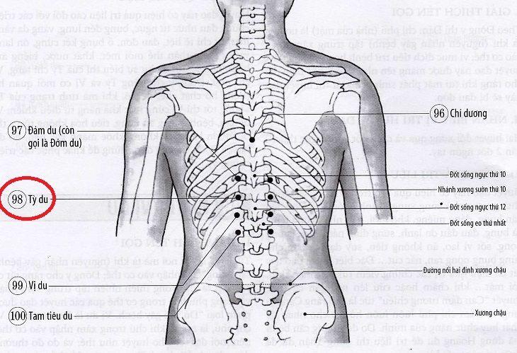 Huyệt Tỳ Du là huyệt vị quan trọng, được ứng dụng phổ biến trong điều trị bệnh