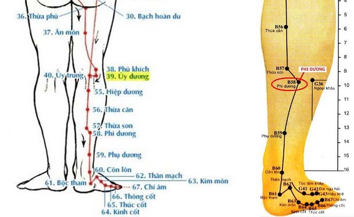 Huyệt Phi Dương nằm ở phần bắp chân