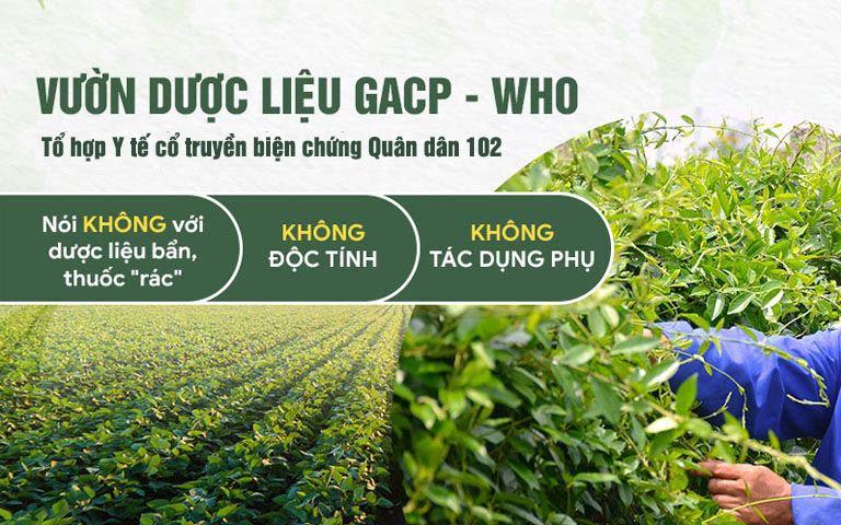 Toàn bộ dược liệu sử dụng đều đạt tiêu chuẩn GACP - WHO