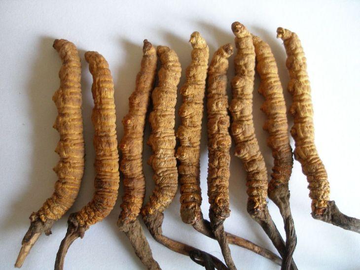 Hình ảnh đông trùng hạ thảo khô nguyên con