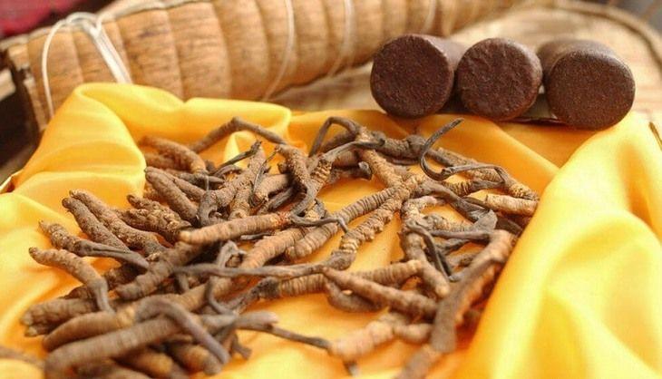 Đông trùng hạ thảo khô - Công dụng, cách dùng hiệu quả và địa chỉ mua uy tín nhất hiện nay