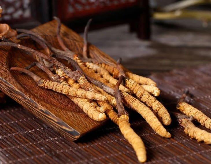 Loại đông trùng Tây Tạng được tìm thấy trong tự nhiên