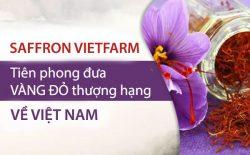 Saffron Vietfarm