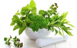 Tận dụng các loại thảo dược có sẵn trong tự nhiên chữa viêm amindan