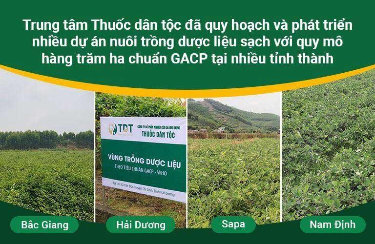 Quy mô vườn dược liệu Thuốc dân tộc lên đến hàng ngàn hecta
