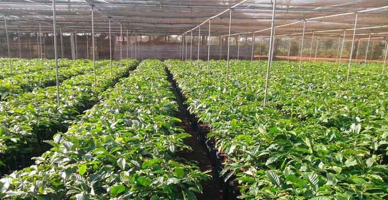 Vườn thảo dược chuyên canh do chính Quân dân 102 phát triển