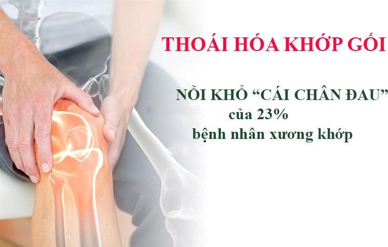 Thoái hóa khớp gối chiếm 23% bệnh nhân xương khớp