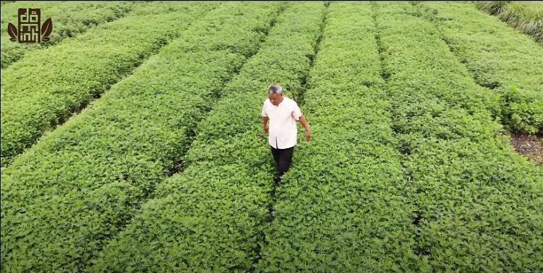 Vườn chuyên canh dược liệu sạch của Đỗ Minh Đường