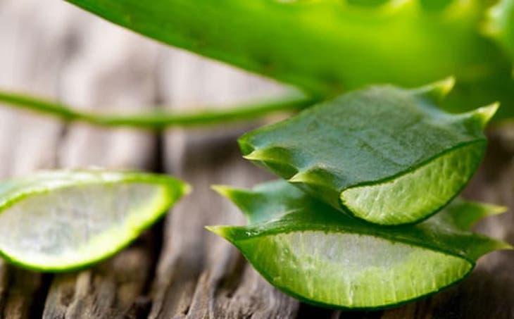 Lô hội là một loại cây có nhiều lợi ích đối với sức khỏe