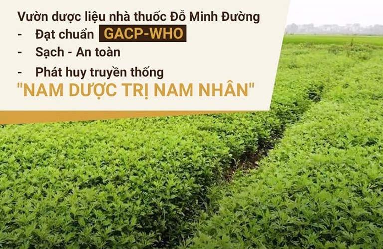 Vườn dược liệu sạch Đỗ Minh