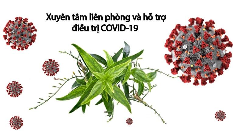 Vị thuốc xuyên tâm liên trong bài thuốc Tăng sức đề kháng Đỗ Minh đã được kiểm chứng hỗ trợ điều trị Covid-19