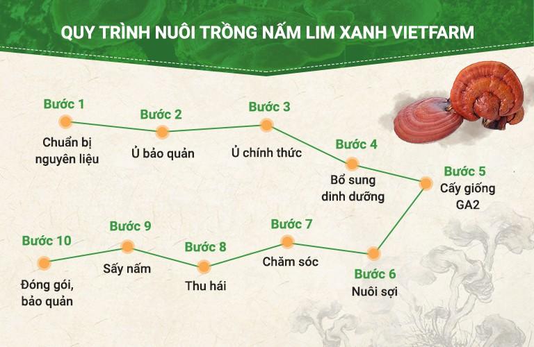 10 bước trong toàn bộ quy trình nuôi trồng nấm lim xanh Vietfarm